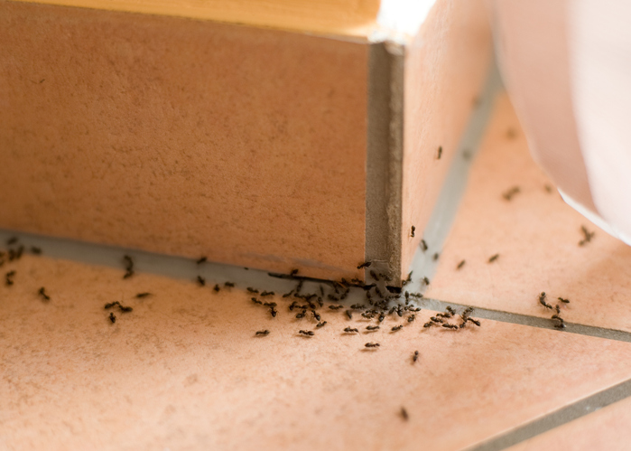 How To Keep Ants Outside Of Your Home